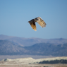 Owl, South Shore Mono Lake