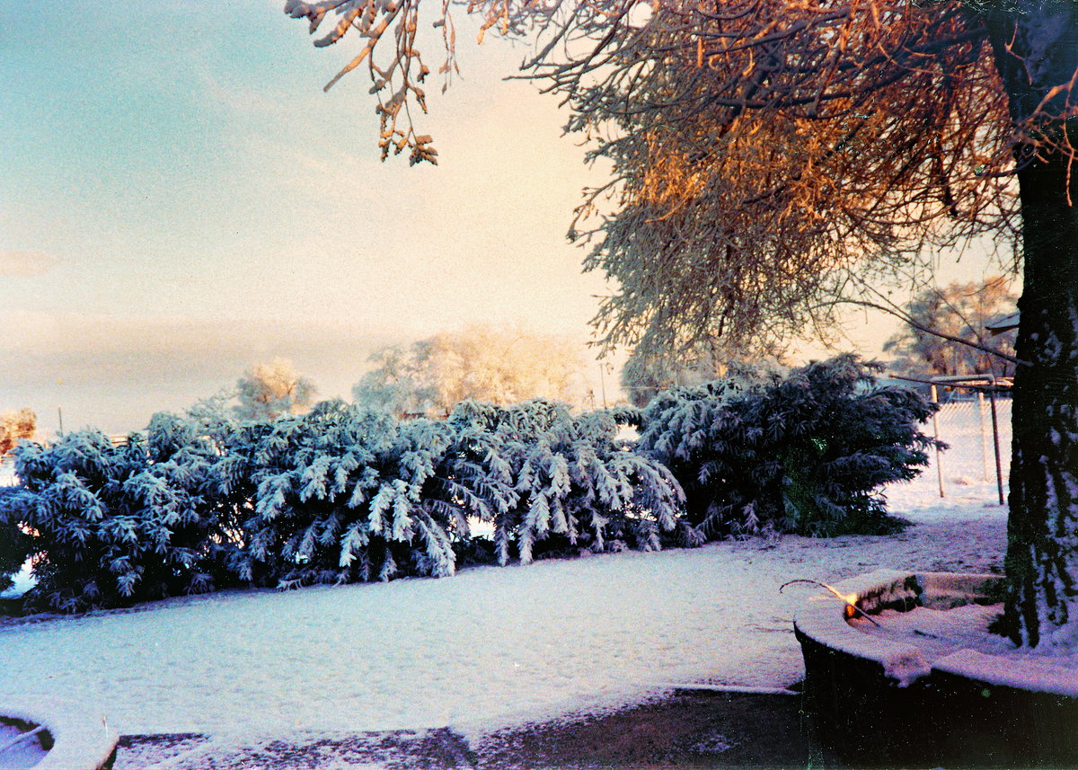 Winter at Rancho Cascabel - 1987
